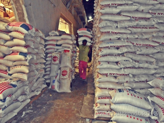 A Haitian worker carries sacks of rice on his back..